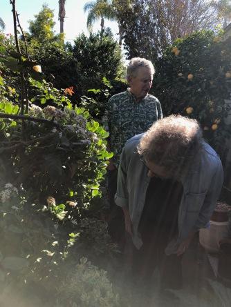 John coronado rose garden