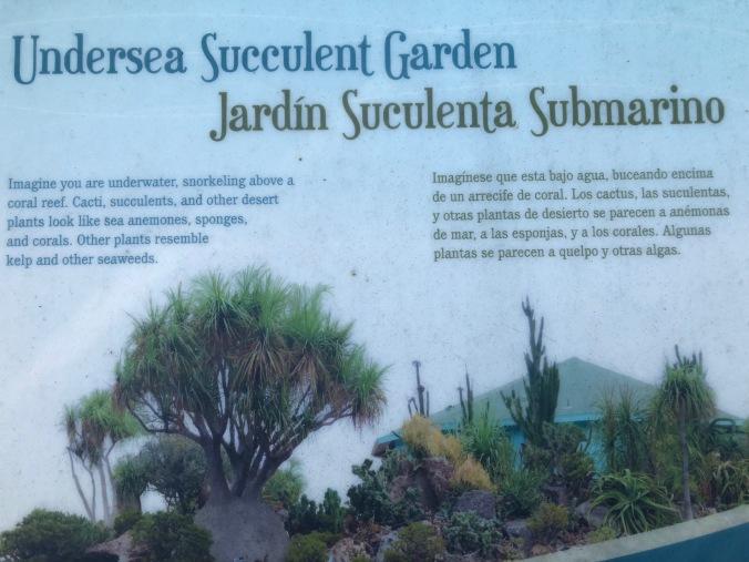 Undersea Succulent Garden