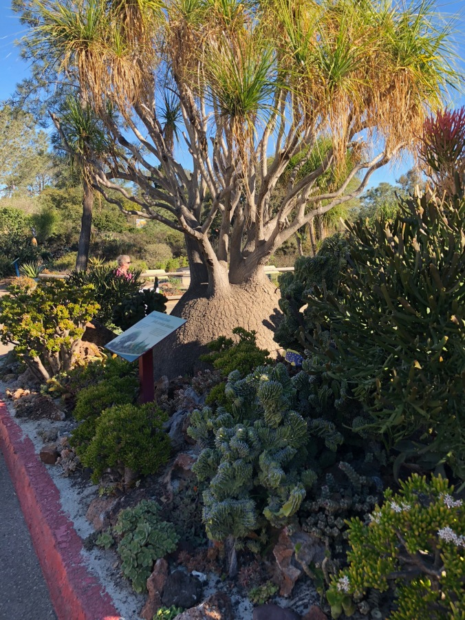 undersea succulent gardenMG_0456