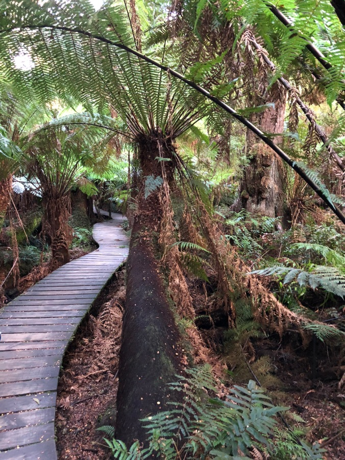 Boardwalk tree fern