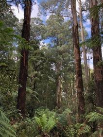 Bush trees, ferns